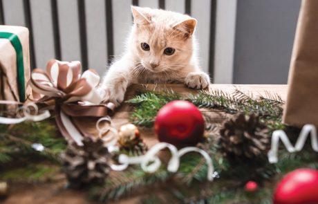 Holiday Hazards for Dogs and Cats